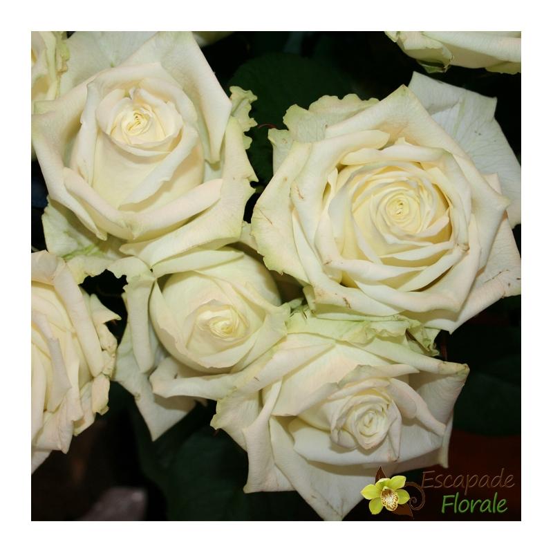 Grosse rose blanche escapade florale for Envoyer des roses
