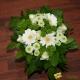 Bouquet demoiselle blanc et vert