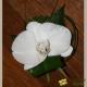 Boutonnière Phalaenopsis