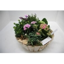 Coupe 33€ escapade florale