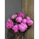 Bouquet 10 pivoines ROSE 35€