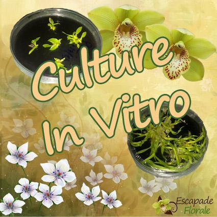 Culture in Vitro chez Escapade Florale
