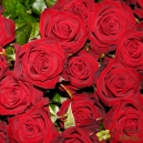 Rose rouge - Petit bouton