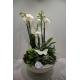 compo orchidee 50€
